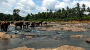 Sri Lanka-031