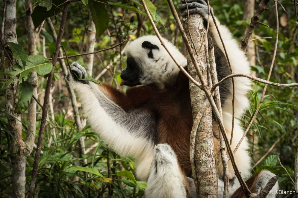 Madagascar-003