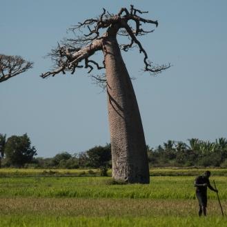 Madagascar-076